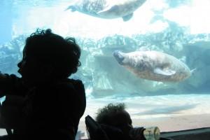 ayrie, shiya and the sea lions